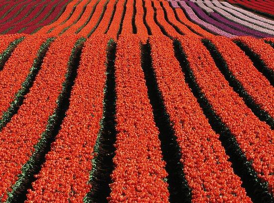 Ribbons of colour... by Mary Trebilco