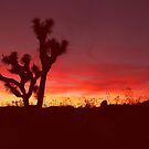 Joshua Tree Sunset by steveberlin