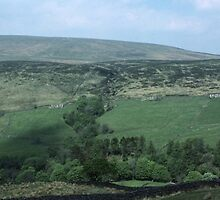 Moors stone farmhouses and stone fences from train Carlisle Settle Cumbria England 198405310005 by Fred Mitchell