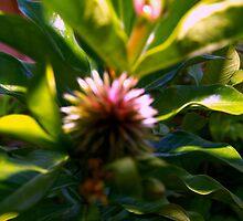 Soft flower pod by ♥⊱ B. Randi Bailey