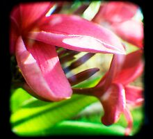 Frangipani Delight TtV by Jules Campbell