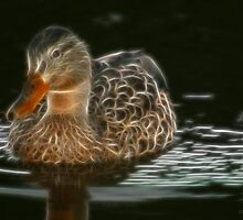 Baby Duck by Vickie Emms