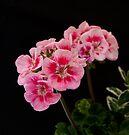 Pink Delight by DonDavisUK