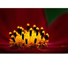 Cosmos Candles Photographic Print