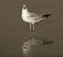 Indialantic Gull I by AlesiaKaye