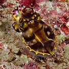 Runway Lights Flamboyant Cuttlefish by Michael Powell