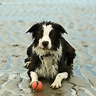 Border Collies by Kirk Photography                      Kirk Friederich
