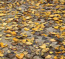 Fall path by Fran0723