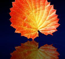 A single Leaf by Sheryl Kasper