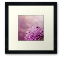 Beauty and the Bee Framed Print