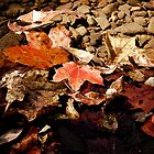 Moments of Fall by Sandy Woolard