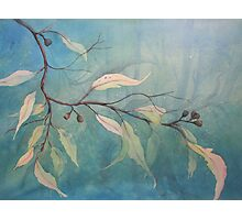 Watercolour: Gum leaves ethereal Photographic Print