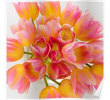 Colorful Tulips Poster