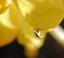 Yellow Drop by Donna Adamski