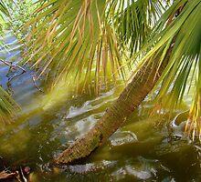Palm Tree In Water by Wanda Raines
