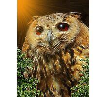 ~ HOOT HOOT OWL ~ Photographic Print