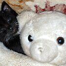 kitty hugs bear by Troy Spencer