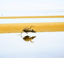 Blue Heron. by capecodart
