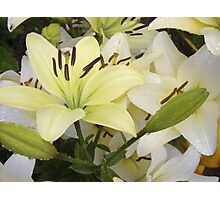 White Lily in the garden 5 Photographic Print