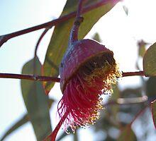 FLOWERING GUM by leanimal