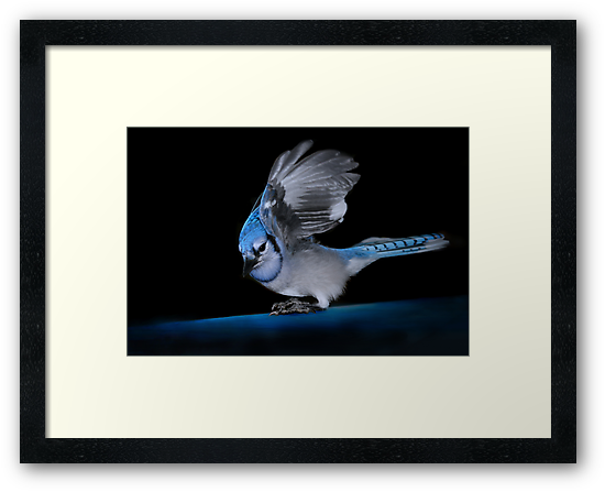 Blue Jay by Renee Dawson