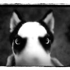 devildog by mike schreiber