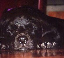 Black Lab puppy by Liz Antonelli
