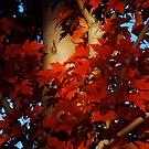 Autumn Blaze III by Pamela Hubbard