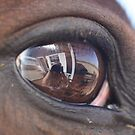 Horse's Eye by Jonathan Bartlett