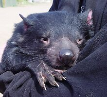 photoj Tassie Devil, 'Having A Hugg' by photoj