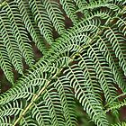 Fern Foliage by Jenny Brice