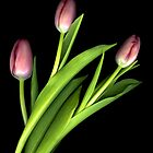 Tulips Three by Marsha Tudor