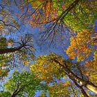 Autumn sky by Béla Török