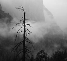 MISTY EL CAPITAN by Chuck Wickham