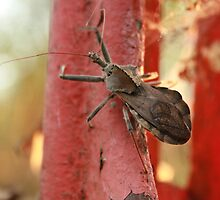 Stink Bug by KBdigital