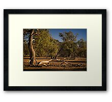 Well Fence and Red Gums Framed Print