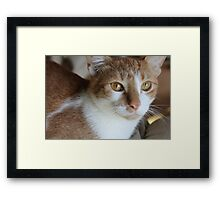 Here kitty kitty Framed Print