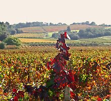 Vineyard in Automn by Fran0723