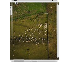 Sheep gathering along fence from the air iPad Case/Skin