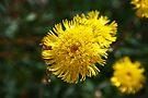 Yellow by Evita