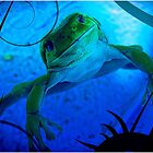 Green Tree Frog In Swimming Pool by Paul Evans