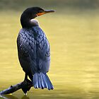 Cormorant by Kimberly Palmer