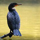 Cormorant by Kimberly Palmer