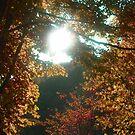 Amazing sun by Sugarchoco