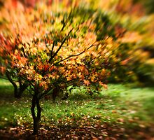 Colour Burst, Westonbirt Arboretum, Gloucestershire, UK by Matthew Walters