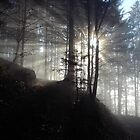 Breaking Fog in Forest by grubb1980