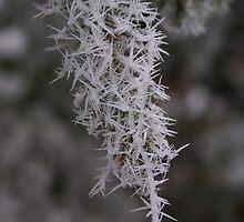 Icy Needles/Threads of Fog by Jackie Muncy