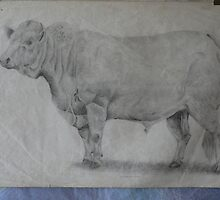 "Early Work - ""Charolais Bull"" by louisegreen"