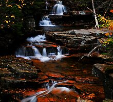 Trailside, Bemis Brook, White Mountains National Forest, NH by Richard VanWart