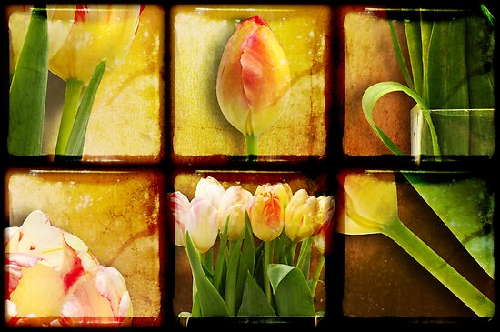 In Praise of Tulips by Heather Prince